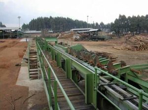 Timber Log Scanning System